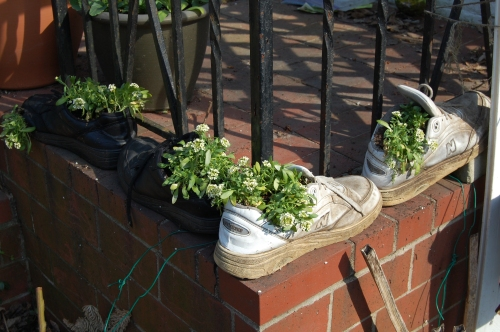 My old shoes planted with  sweet alyssum.