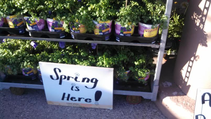 home depot spring