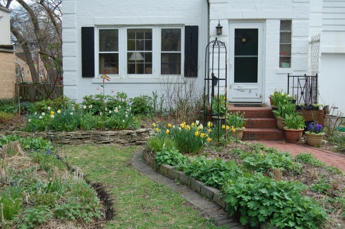 View of the front garden, May 3, 2014.