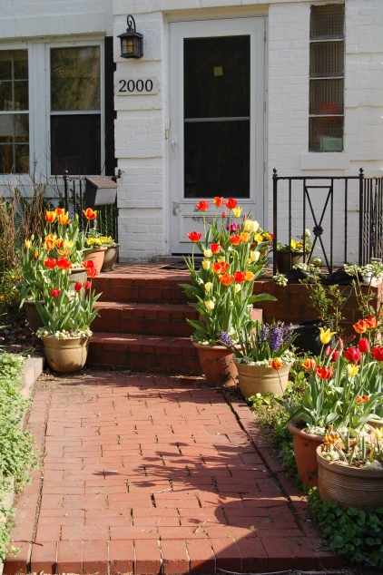 Container tulips line the walk to the front door.