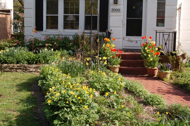 Front garden and house, May 15, 2014.