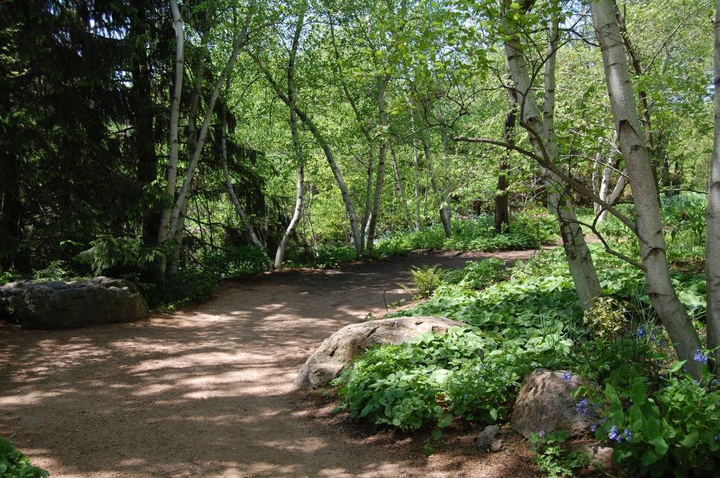 CBG woodland walk.