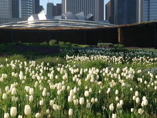 Chicago S Lurie Garden In May Gardeninacity