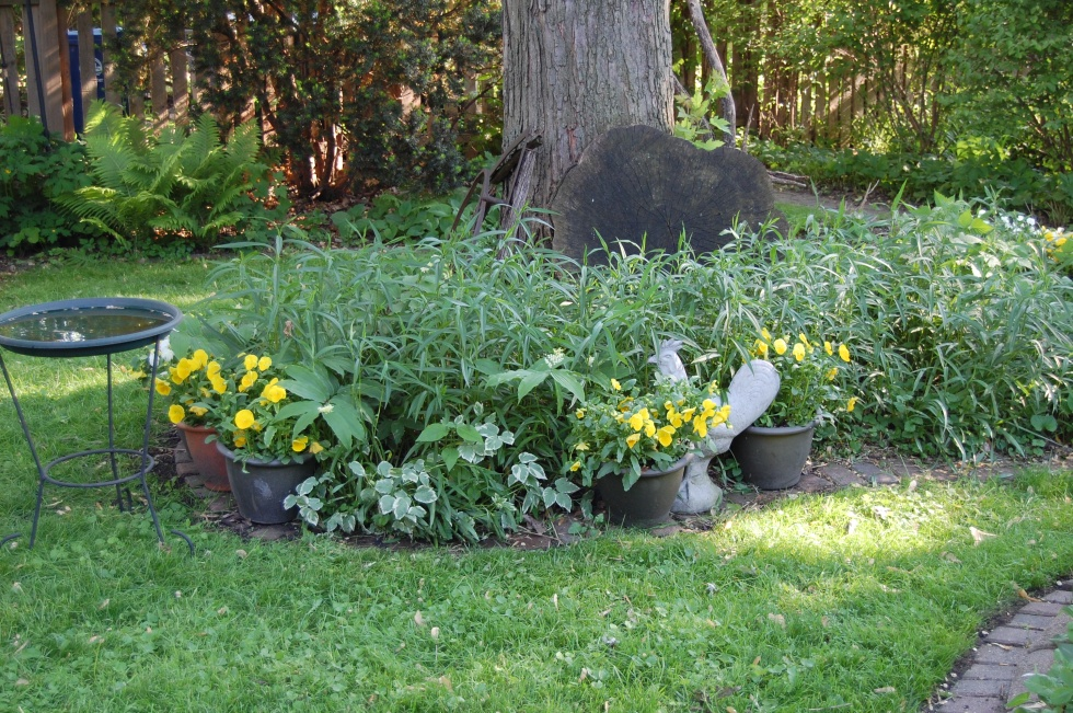 Pansies brighten up my Wild Bed at the base of the silver maple.
