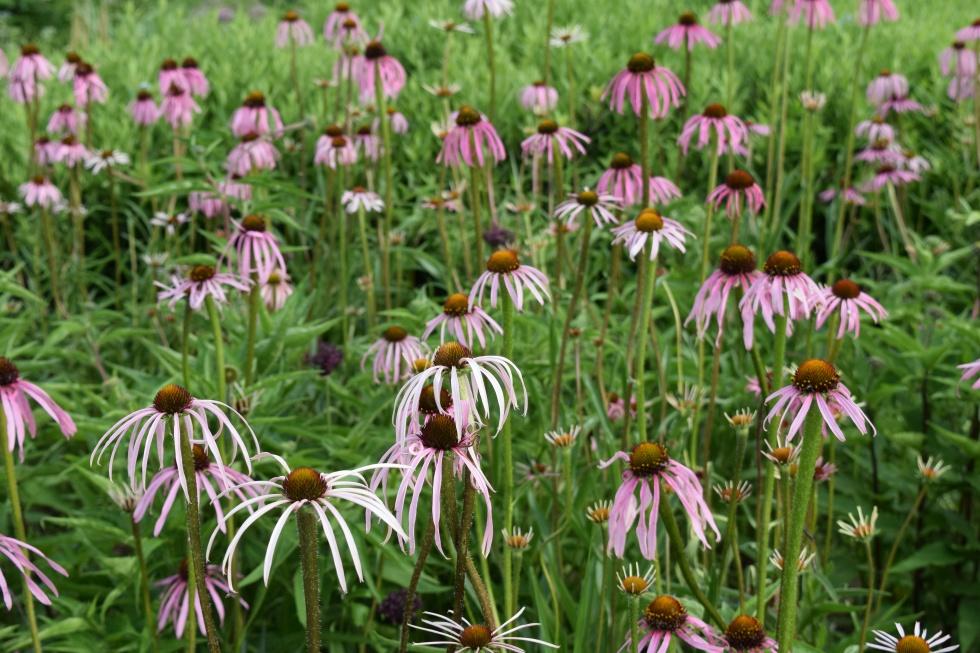DSC_0058 Lurie Garden