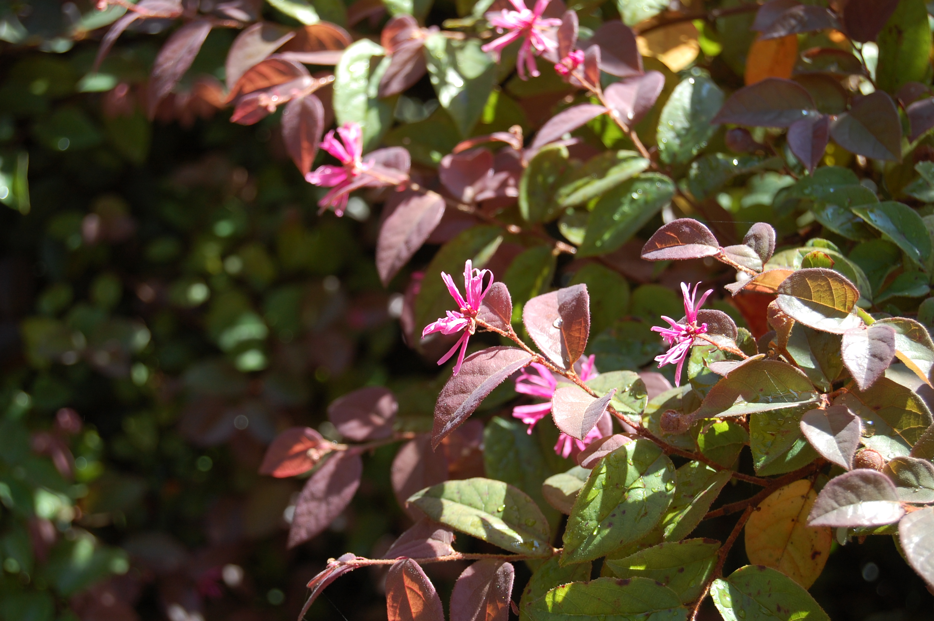 Portland\'s Lan Su Garden – gardeninacity