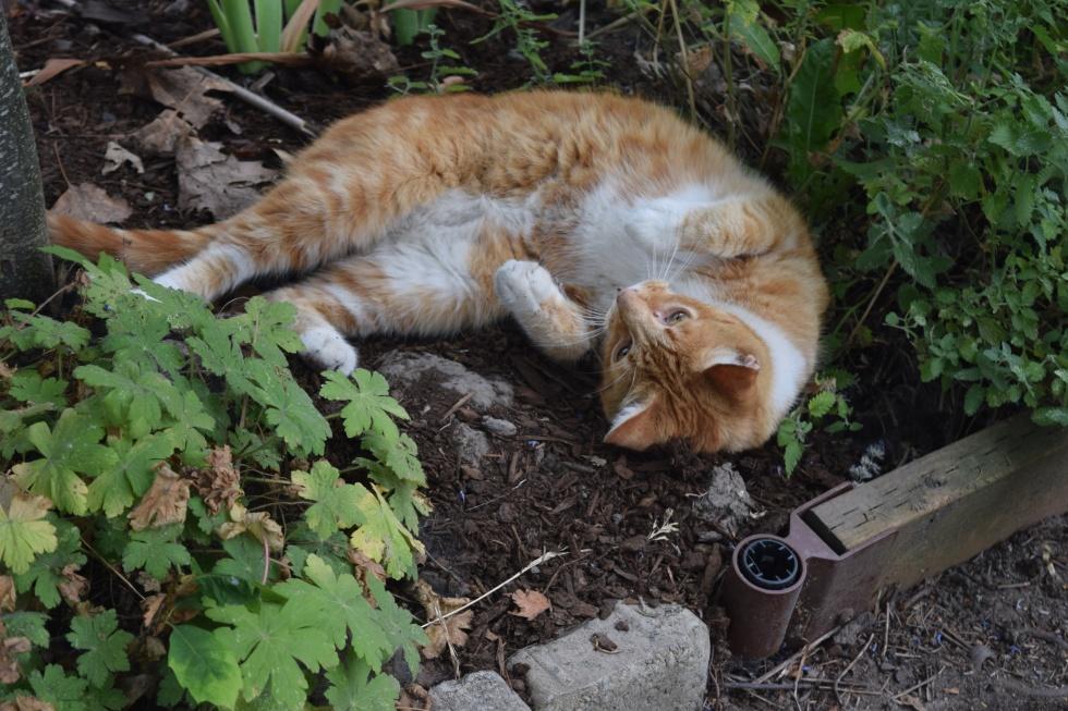 2014-07-13 11.35.43 rhone street gardens cat