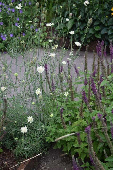 2014-07-13 11.38.30 Rhone Street Gardens