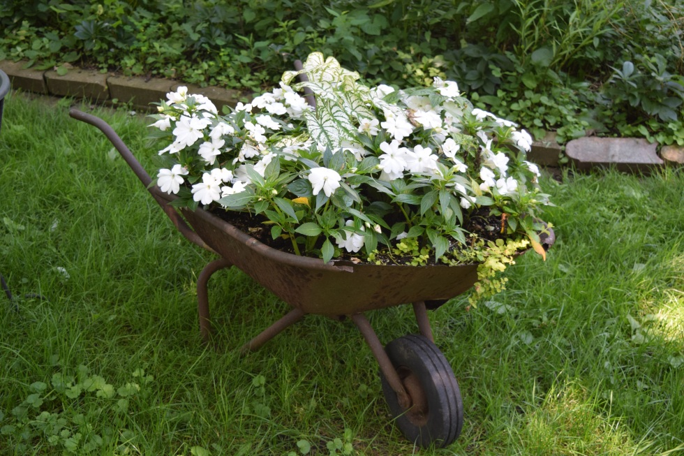 The old wheelbarrow full of NG impatiens