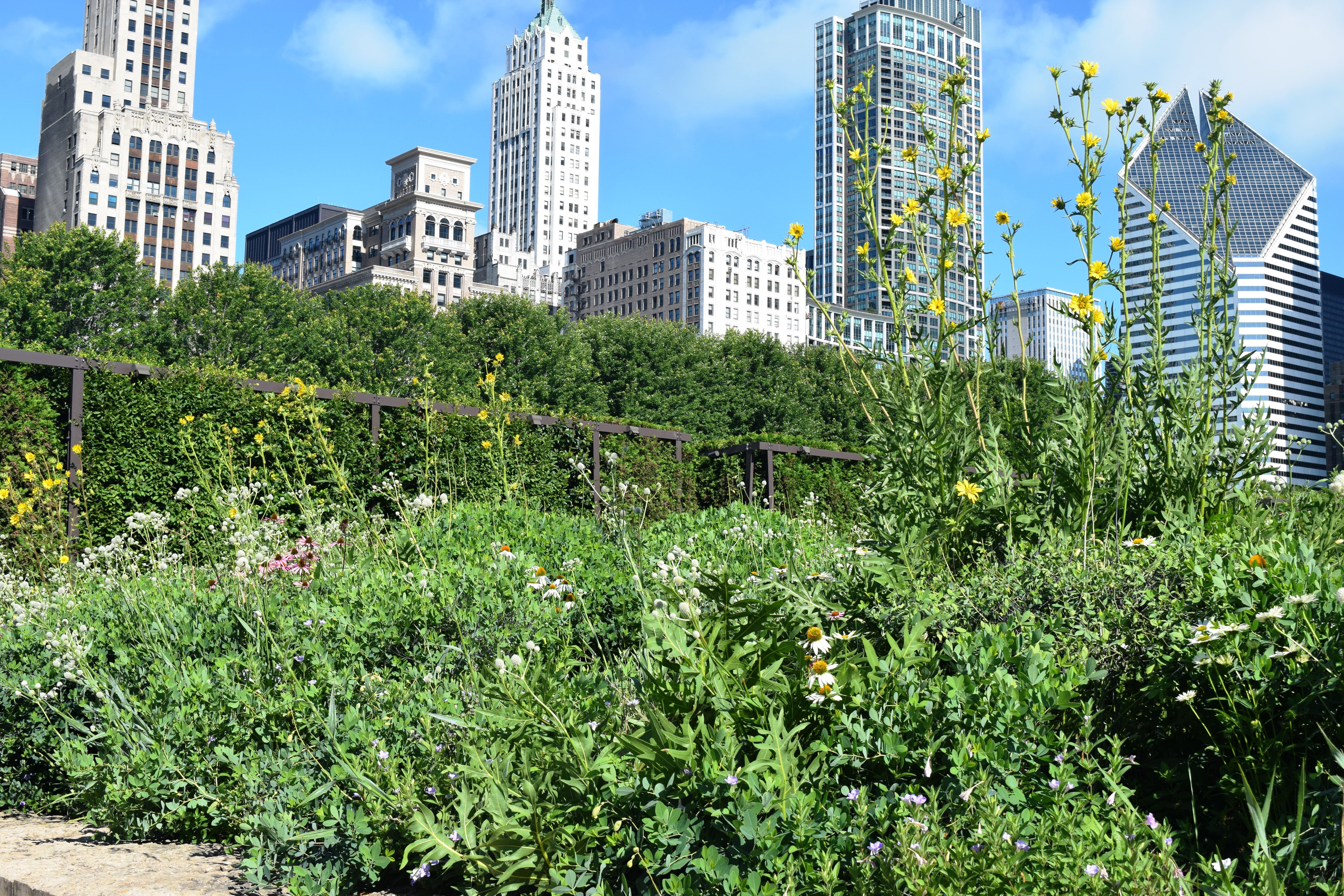 Garden Chicago: Interview With Jennifer Davit, Director Of The Lurie