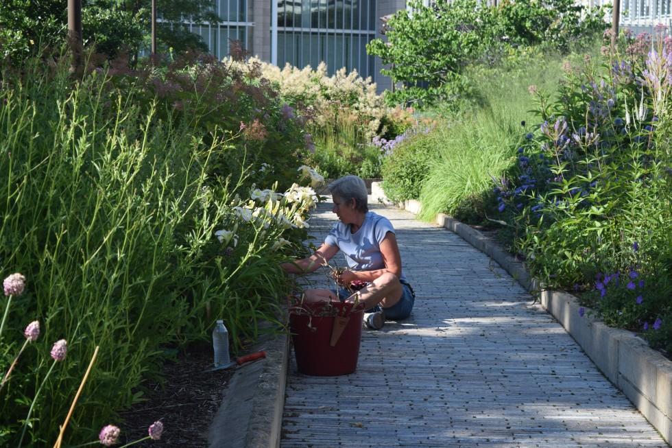 Lurie Garden volunteer at work.