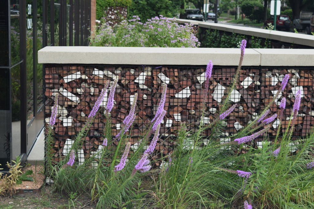 Blazing star in front of a wall built with construction debris.
