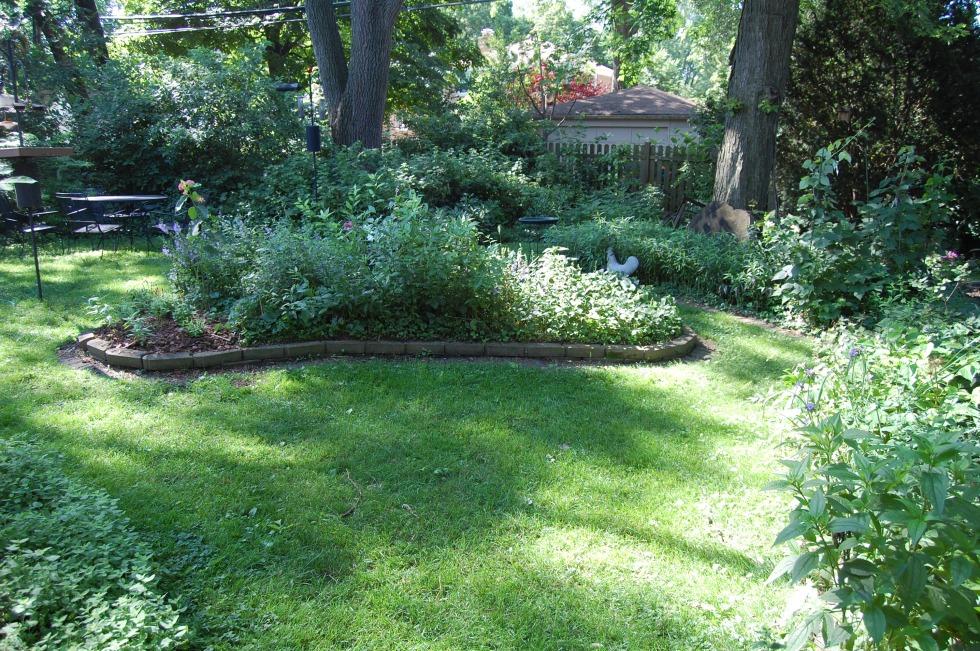 Back garden raised bed last July.