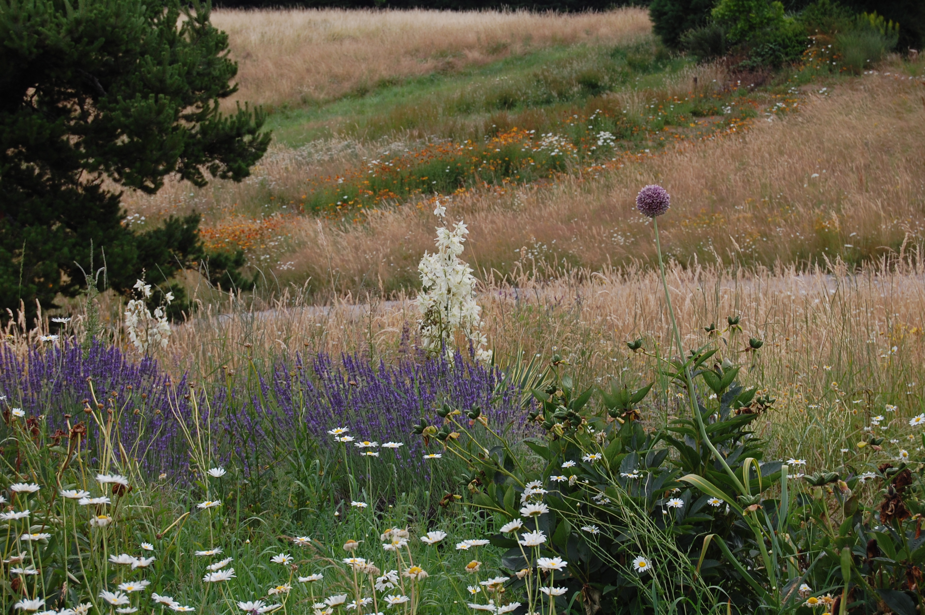 The Mostly Mellow Garden of Westwind Farm Studio – gardeninacity