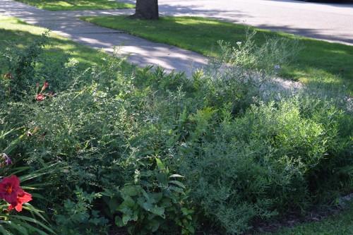 The Left Bank Garden, a collection of green lumps.