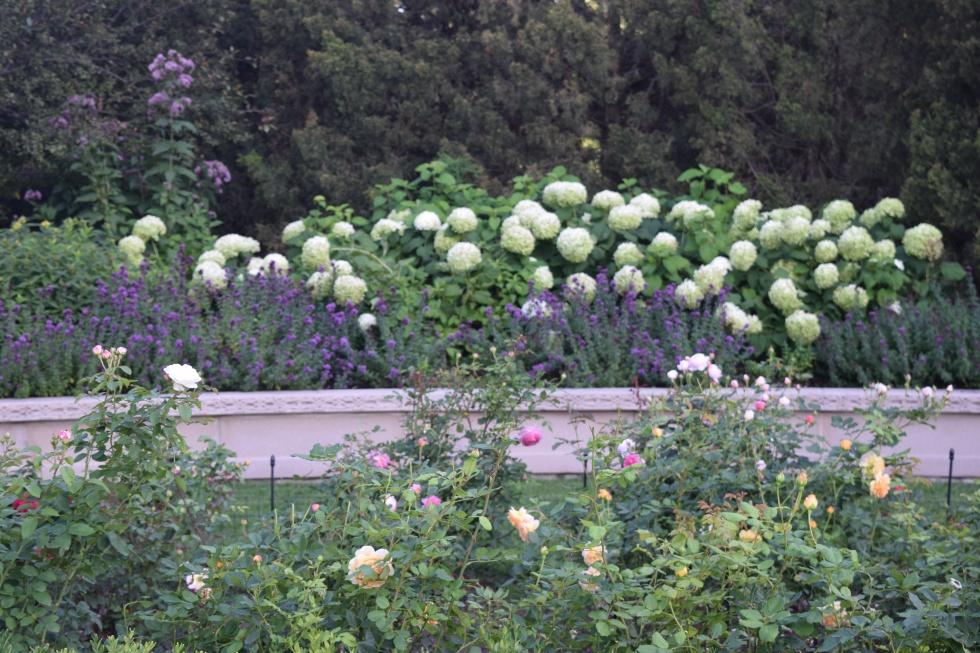 Roses, oregano, thyme, and hydrangeas.