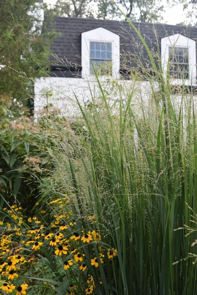 2014-09-01 17.14.53 switchgrass