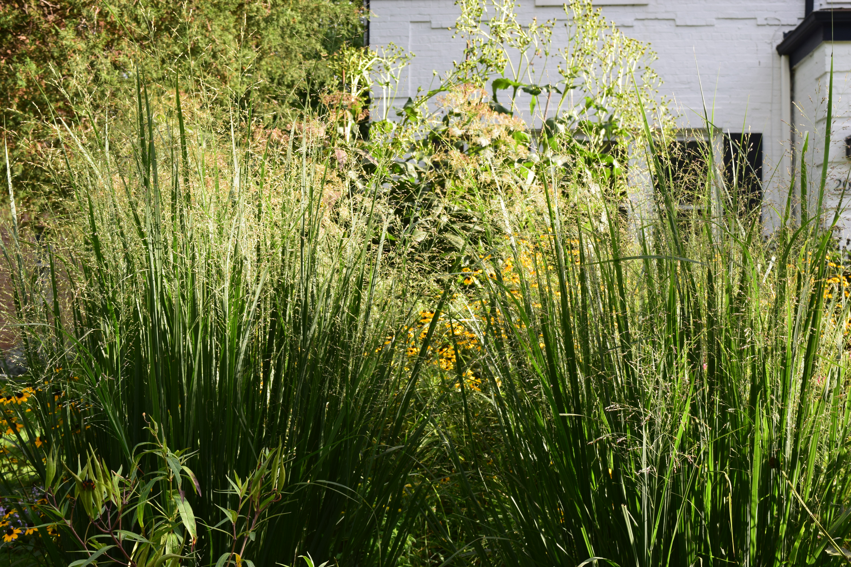 The best ornamental grass in the universe gardeninacity 2014 09 01 171727 workwithnaturefo