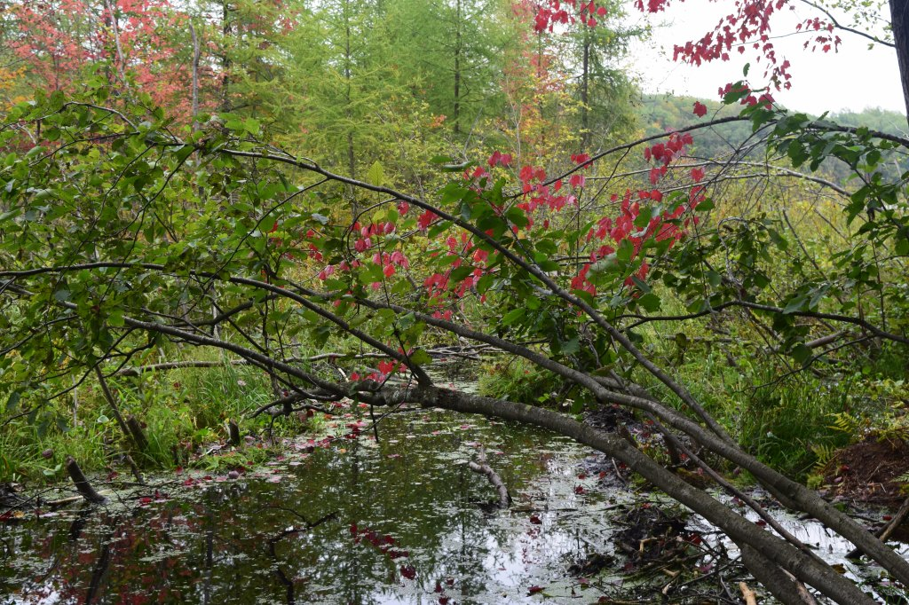 Some early fall color at Hunt Hill.