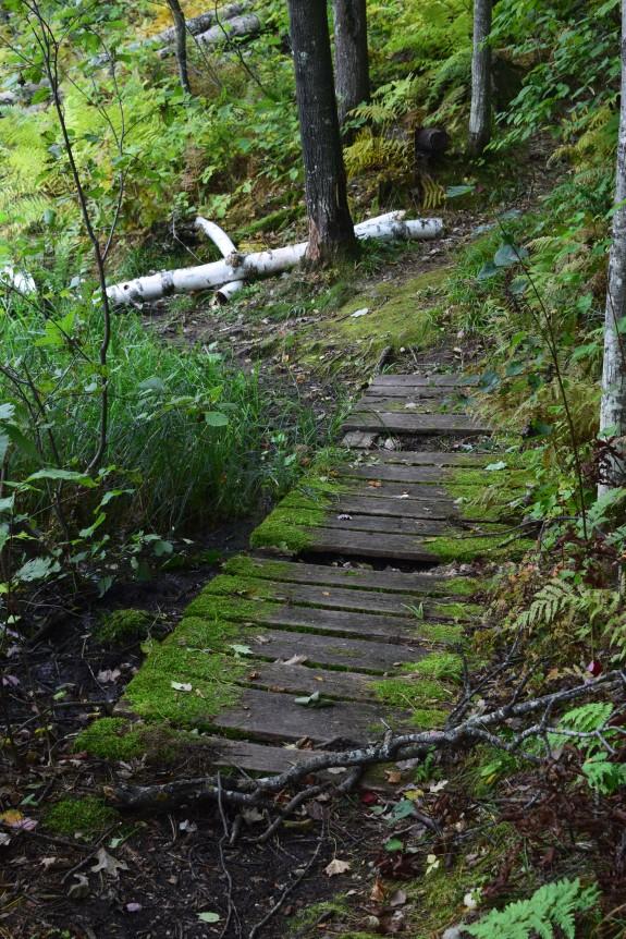 2014-09-19 14.22.13 hunt hill moss