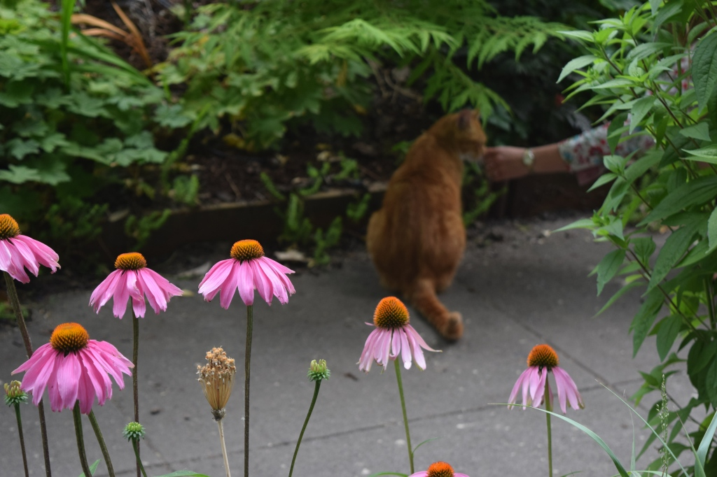 Pay no attention to the person behind the Rudbeckia.