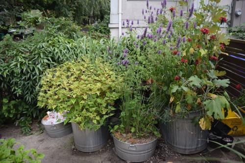 2014-07-13 11.53.31 rhone street gardens