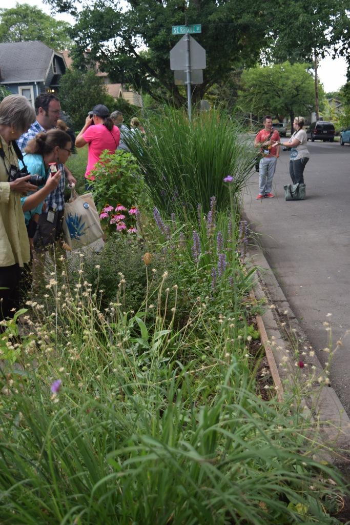 2014-07-13 11.55.17 rhone street gardens