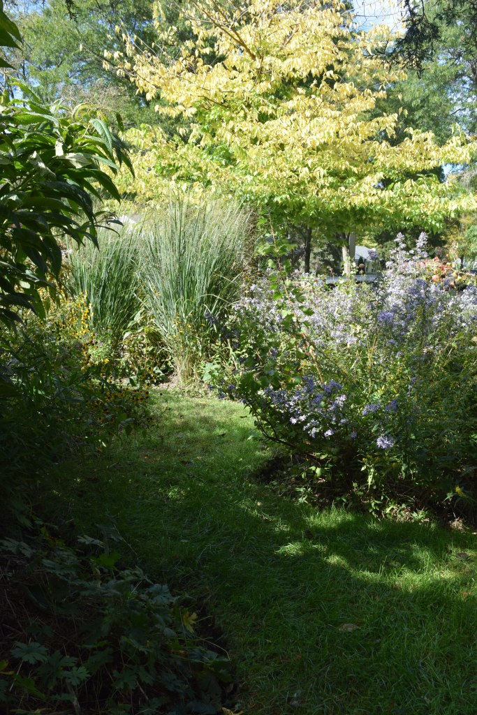 2014-10-05 14.05.34 front garden