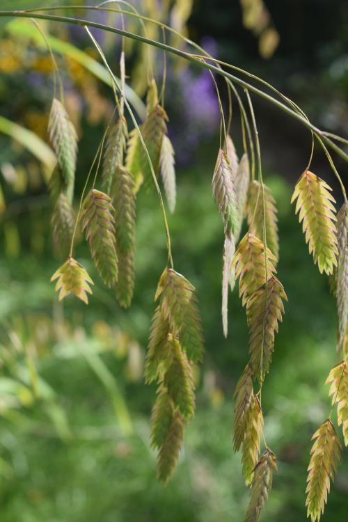 2014-10-05 14.09.13 northern sea oats