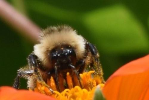 2014-10-05 14.11.03 Bumblebee