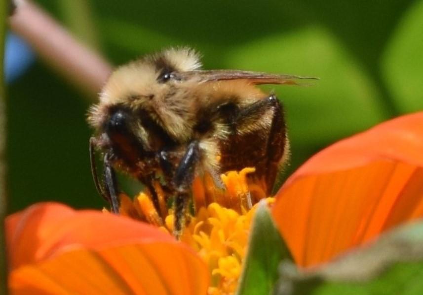 2014-10-05 14.11.06  bumblebee