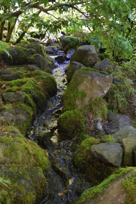 Small stream in the Natural Garden.