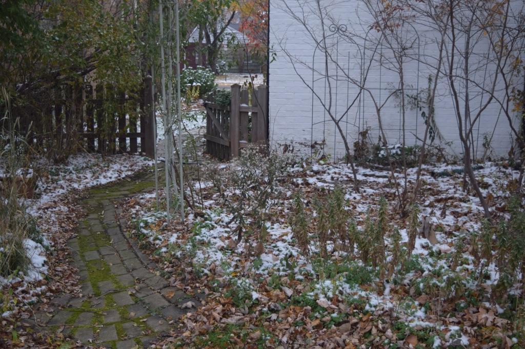 DSC_0589 snow back garden