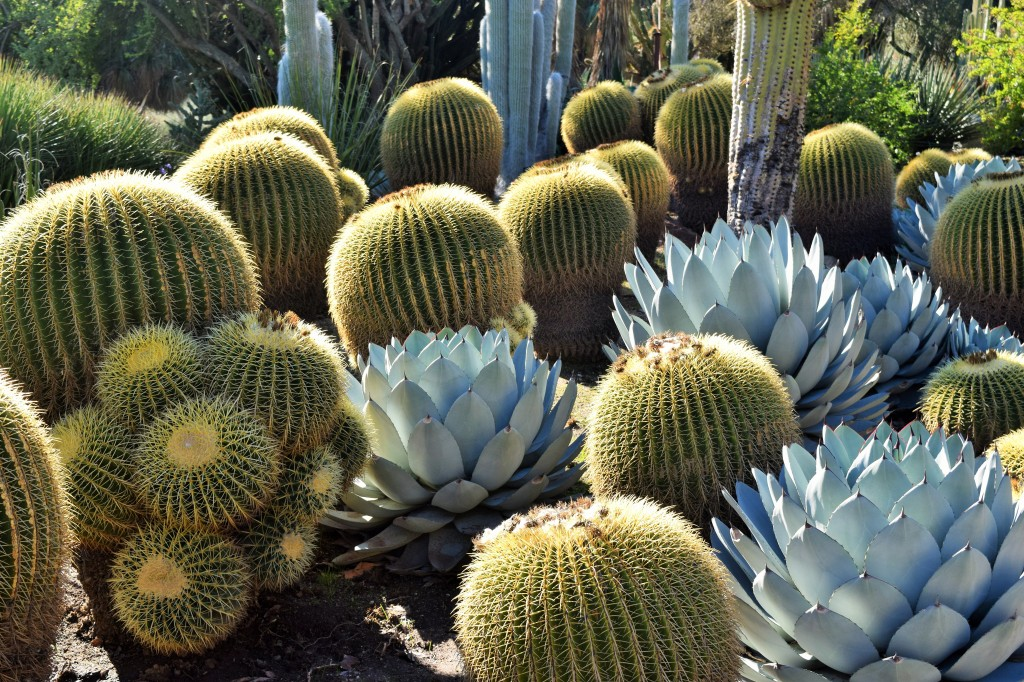 Desert Garden at the Huntington Library
