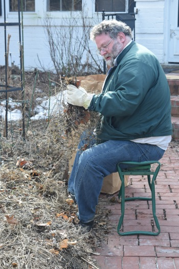 Pulling Nepeta with the help of my garden bench/kneeler.