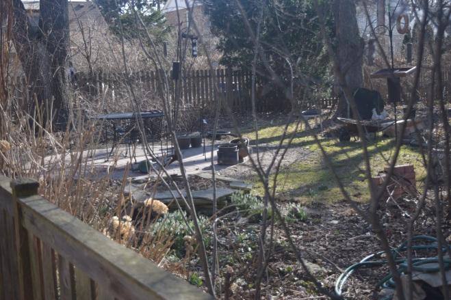 Back garden, March 22, 2015.