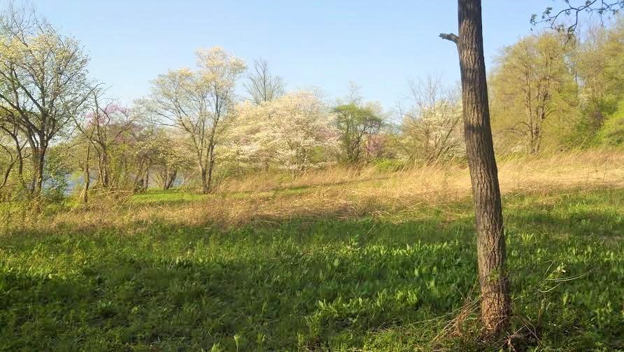 lmg fieldwcornus lincoln memorial garden