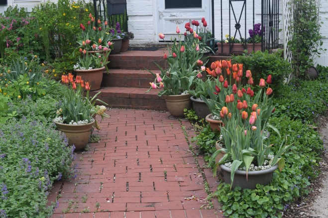 Happy container tulips greet visitors at the front walk.