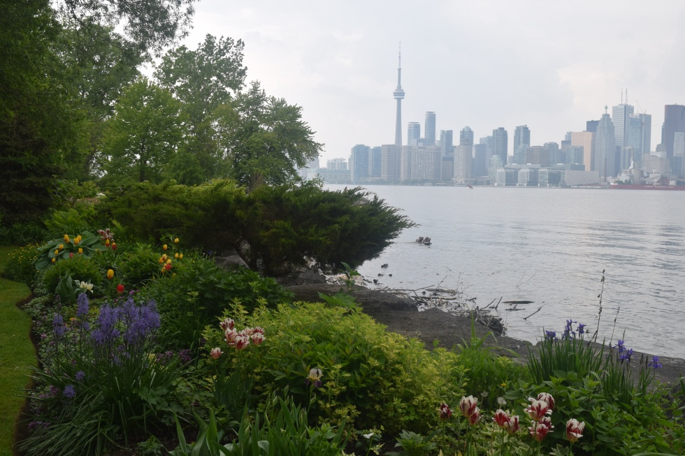 Another view of downtown Toronto, this one from an island garden. Note the tulips, al;ks blooming in June.