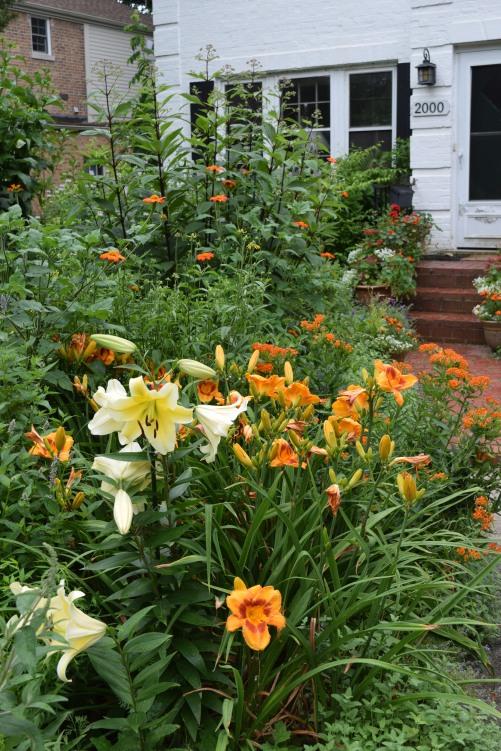 DSC_0227 orienpet lilies