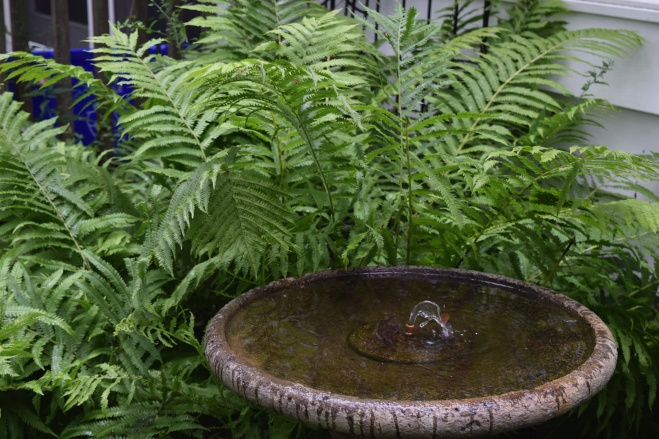 DSC_0260 ferns and fountain