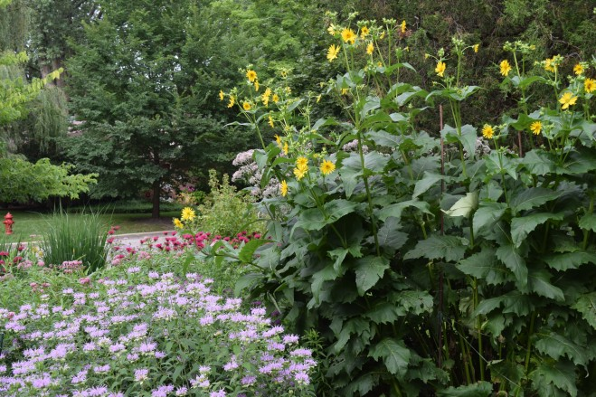 Cup Plant and Wild Bergamot