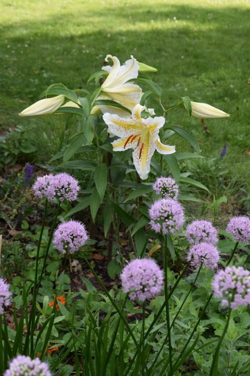 'Conca d'O' with 'Summer Beauty' Allium