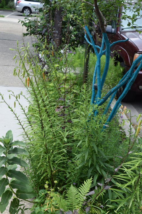 Veronica has also planted her very narrow parkway along the street.
