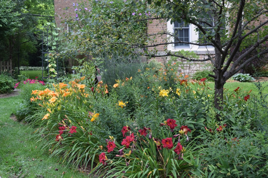 Daylilies 'Chicago Apache' and 'Egyptian Spice'.