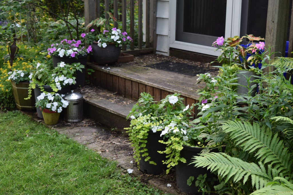 Flowering containers on the back steps.
