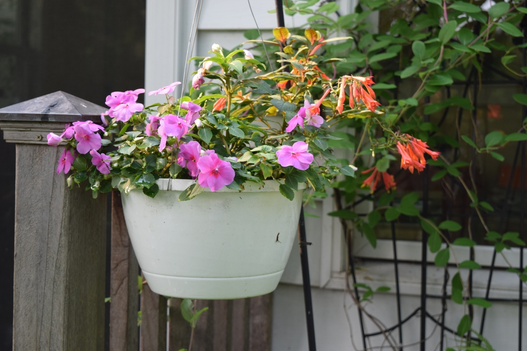 Hanging basket with Impatiens and Fuchsia.