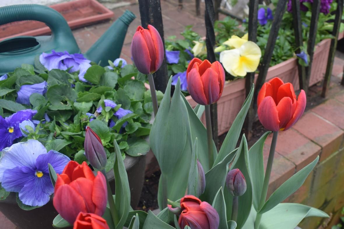 2015-05-04 08.24.14 couleur cardinal
