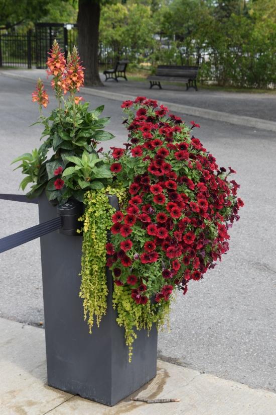 2015-08-29 11.26.06 Montreal Botanic Garden