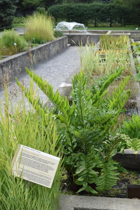 2015-08-29 12.00.40 montreal botanical garden